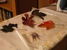 How to press and perseve leaves and flowers using wax paper and an iron -TIP: to better preserve color, first place between pages of books or newspaper for several days