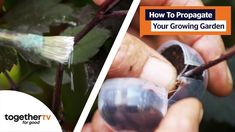 The Perfect Propagation Techniques for Your Garden   Show Me Your Garden Growing Gardens, Garden Show, Show Me Your, Propagation, Globe, Plant, Make It Yourself, Skirt, House