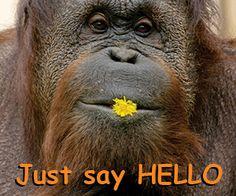 """""""Hello My World!"""" se axează pe salvarea urangutanilor, una din cele mai inteligente creaturi din lumea animală. Aceștia își pierd cu rapiditate habitatul natural din cauza tăierii anuale masive a zeci de mii de hectare de pădure tropicală. Plantarea industrială a palmierilor în scopul extragerii uleiului de palmier este o amenințare semnificativă și imediată pentru specia urangutanilor."""