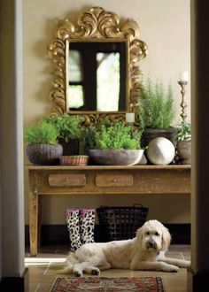 Fabulous old table paired with ornate mirror and lots of plants.... and of course a dog :)