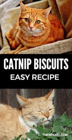 Catnip Biscuits Recipe Easy Video Tutorial