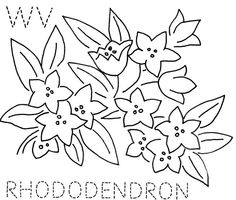 West Virginia Rhododendron | Flickr - Photo Sharing!