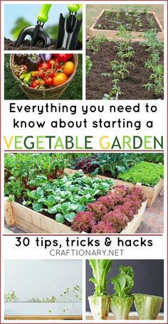 Vegetable garden tips, tricks and hacks for starters, and useful information that can improve your experience #gardening
