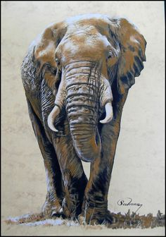 African Elephant...pastel on paper