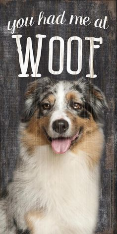 """Australian Shepherd Sign – 5×10 You Had me at WOOF! How adorable are these """"You had me at WOOF"""" Australian Shepherd signs?! They play off the beloved catchphrase, """"you had me at hello"""" and when your dog lets out a big WOOF, he is saying hello to you too! These measure 5 inches by 10 …"""