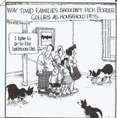 Border Collie Humor