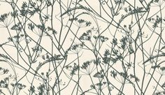 Meadow+(4W-MDOW-WH/B)+-+Clarissa+Hulse+Wallpapers+-+A+contemporary+stylized+all+over+design+of+natural+meadow+stems+and+seed+heads.+Shown+drawn+in+the+black+on+off+white.+Other+colour+ways+available.+Please+request+a+sample+for+true+colour+match.