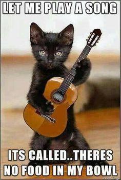 cat playing music