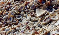8 Seashells You'll Find in Fort Myers & Sanibel