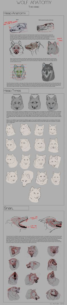 Wolf Anatomy - Part 3 by Autlaw.deviantart.com on @deviantART