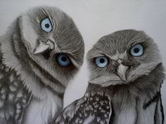 Owls ~ An example of aqua and gray in nature.