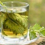 Zobacz co ci da systematyczne picie pokrzywy | Szkolenia dietetyczne