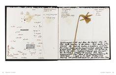 Derek Jarman's Sketchbooks: Derek Jarman, Stephen Farthing, Ed Webb-Ingall, Tilda Swinton: 9780500516942: Amazon.com: Books