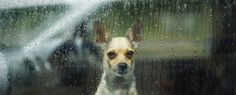 Rainy Day Repair Discount - Tuesday September 27th