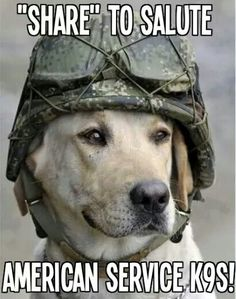 Our brave service dogs...                                                                                                                                                                                 More