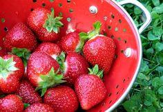 In My Kitchen Garden: Quick and Easy Gardening Tip:How To Grow Bigger Strawberries Next Year Garden Yard Ideas, Easy Garden, Organic Gardening, Gardening Tips, Backyard Stream, Greenhouse Gardening, Fresh Vegetables, Compost, Fresh Fruit