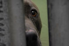 Why We Shouldn't Sugarcoat the Deaths of Thousands of Shelter Pets Every Day