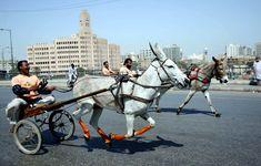 Image result for donkey race Donkey, Racing, Horses, Animals, Image, Running, Animales, Animaux, Donkeys