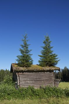 Quite a hair-do on this teeny house! From Valdres, Norway. Photo: Åse Margrethe Hansen, 2013