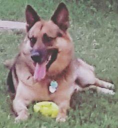Lost Dog - German Shepherd Dog - San Antonio, TX, United States