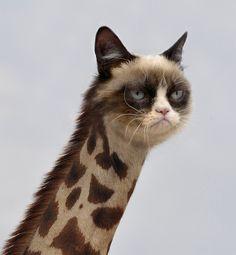 Grumpy Cat Giraffe wow lol