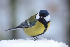 Early winter by Rajmund67 on DeviantArt