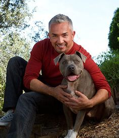 los 5 mejores consejos para tener un perro equilibrado (cesar millan)