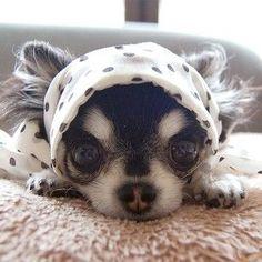 Dada @dog_dada | Websta (Webstagram)