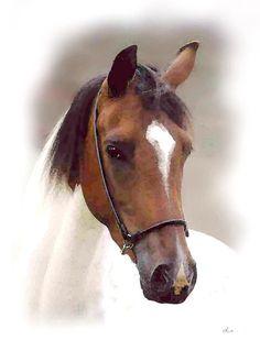 'Pferdeporträt, Kopf 1' von Dirk h. Wendt bei artflakes.com als Poster oder Kunstdruck $18.03