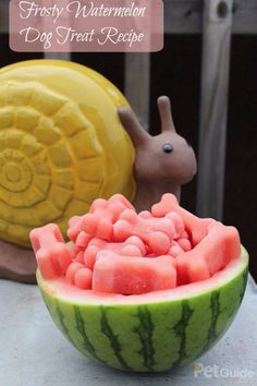 DIY Pet Recipes For Treats and Food - Frosty Watermelon Dog Treat Recipe - Dogs, Cats and Puppies Will Love These Homemade Products and Healthy Recipe Ideas - Peanut Butter, Gluten Free, Grain Free - How To Make Home made Dog and Cat Food - http://diyjoy.com/diy-pet-recipes-food