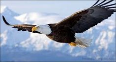native art eagle designs - Google Search