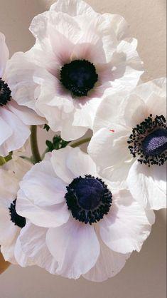 Ranunculus Wedding Bouquet, Ranunculus Flowers, Wedding Flowers, White Anemone Flower, Flowers For Sale, Floral Artwork, Jolie Photo, Flowers Nature, Flower Photos
