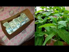 He did this to attract money to his house; Look what happened; Bay Leaf Plant, Money Spells, Attract Money, Feng Shui, Law Of Attraction, Free Money, Shit Happens, Awesome, House