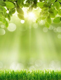 Spring Green Grass Sunshine Bokeh Photography Backdrops