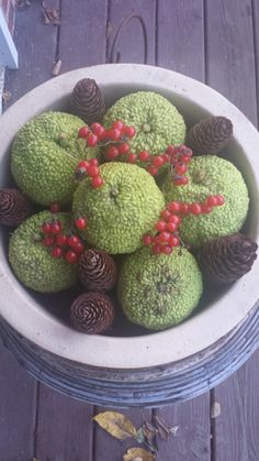Simply holiday decoration # hedge apples