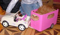 Barbiebil med transport. Måste köpa.