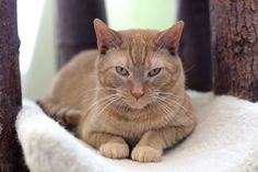 Adoption Tails: Fifty Eight Adoptions!