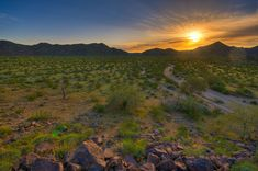 How to Green the World's Deserts: Reversing Desertification with Grass-fed Cows | Food Renegade