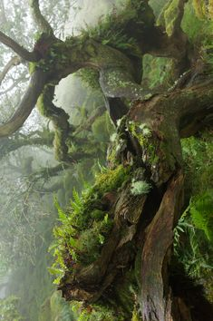 essenceofnxture Uncanny by Duncan George Theres something strange about woods at an altitude of and above Beautiful World, Beautiful Places, Beautiful Series, Beautiful Pictures, Unique Trees, Old Trees, Fantasy Landscape, Nice To Meet, Tree Art