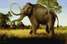 A large Bull Columbian Mammoth by Hermann Trappman