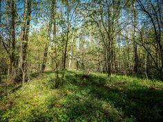 #leaf #lush #sun #fair_weather #igers #guidance # #dawn #park #rural #nature #follow #landscape #picoftheday #lesagul #outdoors #scenery #scene #scenic #environment #russian #россия #season #instagood #bestoftheday #wood #countryside #tree