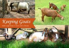 Homesteading:  Self-Sufficient Goat Keeping -Posted on Oct. 27 Keeping Goats, Raising Goats, Raising Rabbits, Self Sufficient Homestead, Female Goat, Happy Goat, Goat Care, Goat Farming, Baby Goats