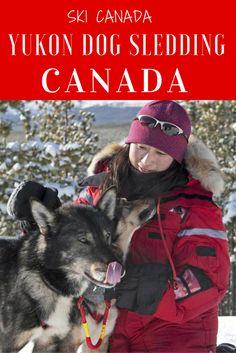 Yukon dogsledding adventure. Learning to be a musher.