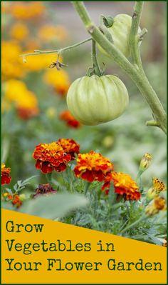Grow vegetables in a flower #garden
