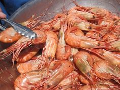 Hungry? Get ready for the BC Spot Prawn Festival, May 5 #Vancouver #tourism