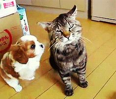 Cute Cats — 18 Perfect Reaction GIFs