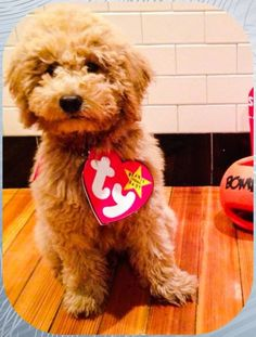 587690b0b34 Ty Beanie Baby Halloween Costume for puppy Baby Puppy Costume