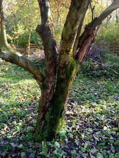 autor: jlez, Poland (tytuł: Natura 9016 - jesień, drzewo, liście, sad i mech)
