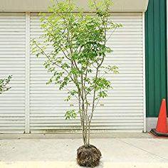 Japanese Plants, D House, Home And Garden, Backyard, Exterior, Outdoor Structures, Green, Design, Gardening