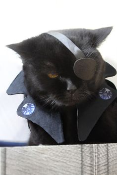 Nick Furry. Head of the Avengpurrs Initiative.